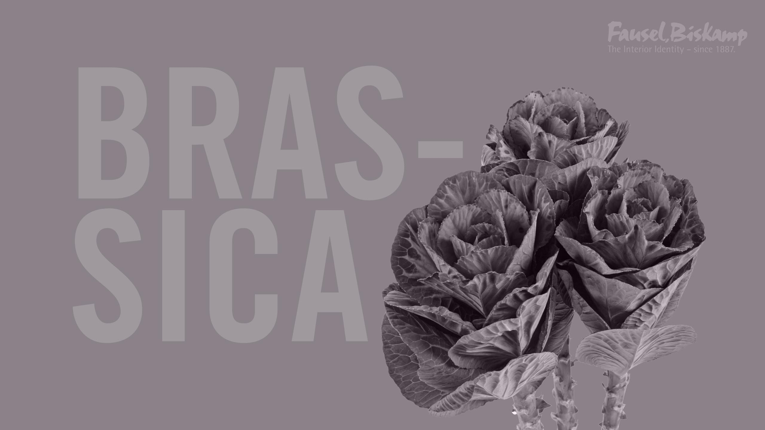 Brassica Wallpaper